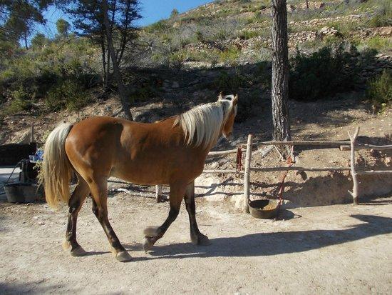 Gentle horses fotograf a de el valle de los caballos de - El valle de los caballos ...