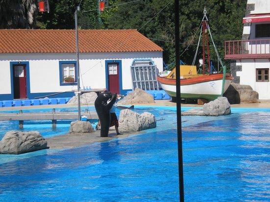 Lisbon Zoo: Espectáculo dos golfinhos