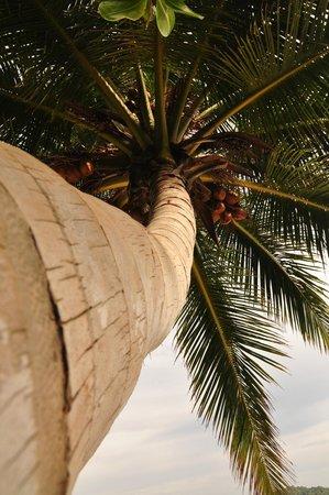 Similan Islands National Park: Similan island