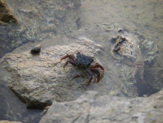 Cove Rotana Resort Ras Al Khaimah: Unterwasserwelt vor der Villa