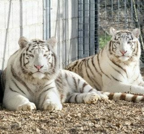 Sawtry, UK: Mohan & Shiva