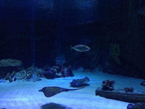 Antalya Aqualand & Dolphinland: скаты и акулы