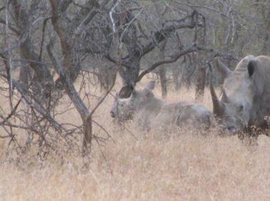 Rhino River Lodge: Rhino