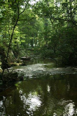 Travelers Rest / N Greenville KOA: Johnson Creek