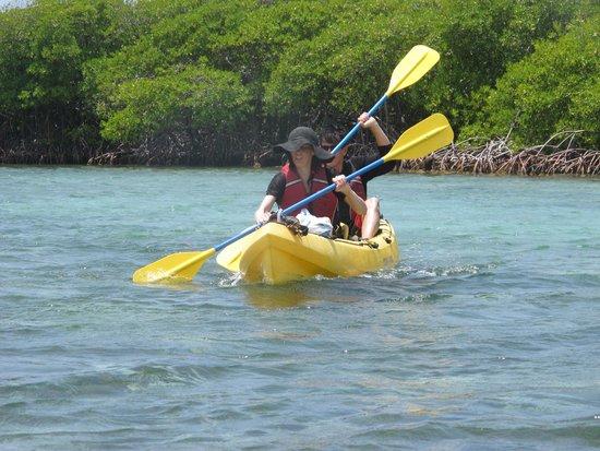 Virgin Islands Ecotours: kayaking the mangrove lagoon