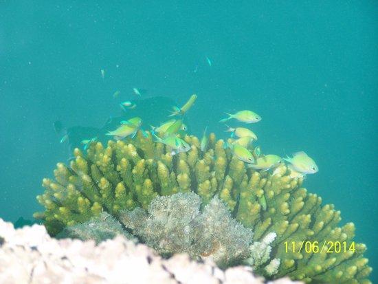 Marina Lodge at Port Ghalib: Rybki 2