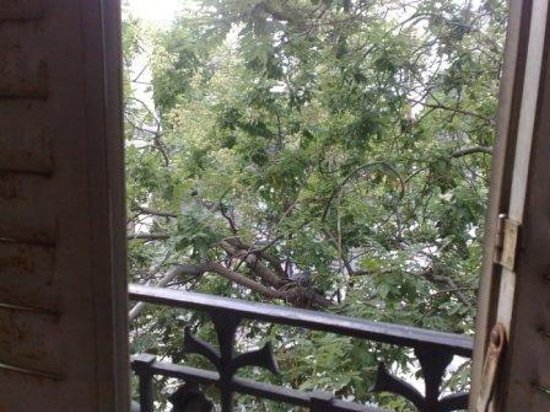 Hotel Tolbiac : dove's nest outside our window