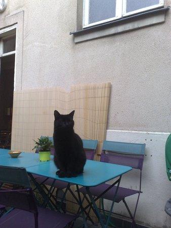 Hotel Tolbiac: Hotel cat