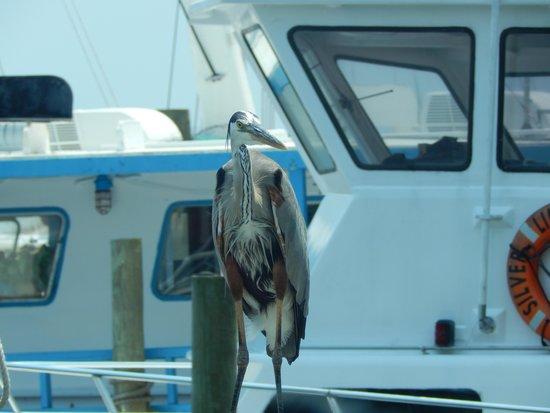 Destin Harbor: bird resting!