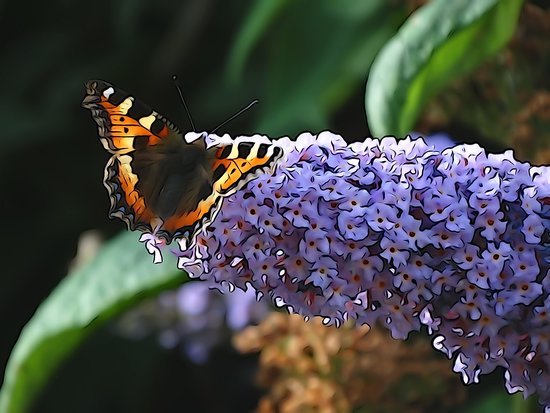 The Woodlands: Small Tortoiseshell in garden