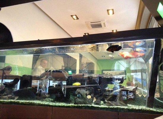 Le Festival de la Mer : Внутри красивый аквариум