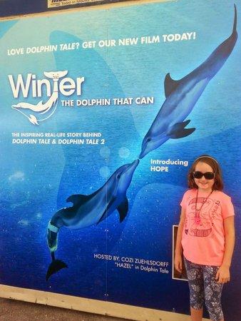 Clearwater Marine Aquarium: Winter 1