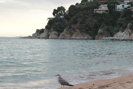 Lloret Beach: Evening time in LLoret