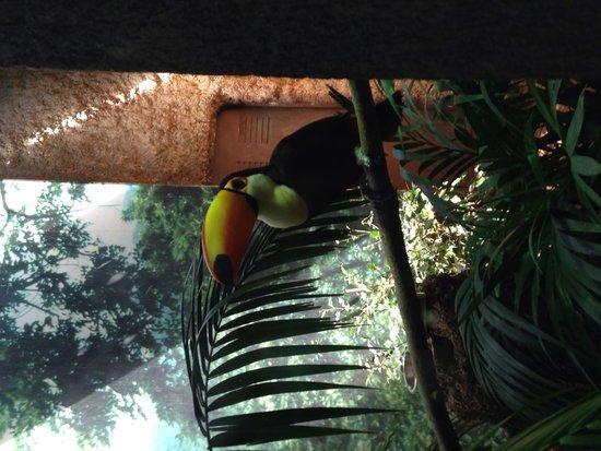 Zoo de Barcelona: Coco toucan