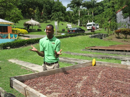 The Grenada Chocolate Company: Our Guide