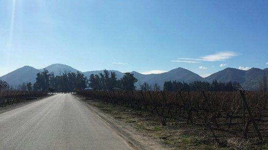 Santa Rita Winery: Viña Santa Rita