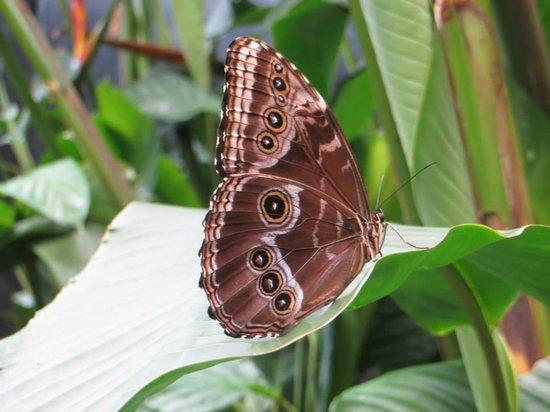 La Paz Waterfall Gardens: Butterfly