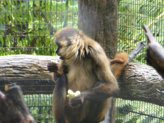La Paz Waterfall Gardens: Monkey