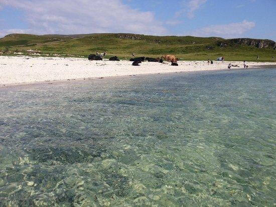 Claigan Coral Beach: Playa de arena blanca, agua cristalina y vacas