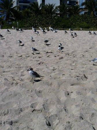 Lexington Hotel - Miami Beach: gaviotas en la playa