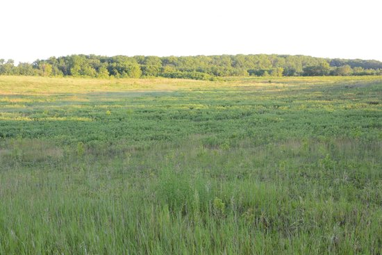 Cowling Arboretum at Carleton College: The northern part of the lower arb in the morning