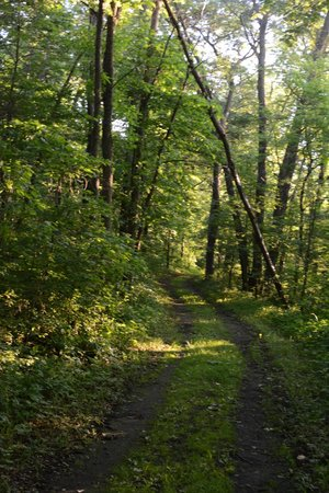 Cowling Arboretum at Carleton College: Part of the arb woodland trail