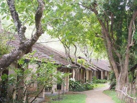 Sigiriya Village Hotel: 敷地