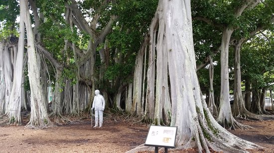 Edison & Ford Winter Estates: Edison's famous Banyan tree
