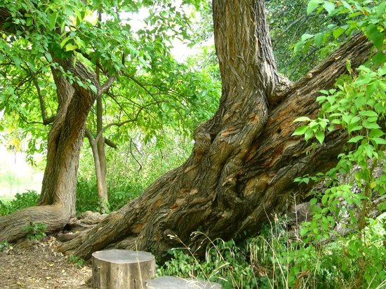 Jardin des plantes : old trees are so beautiful...loved to see them.