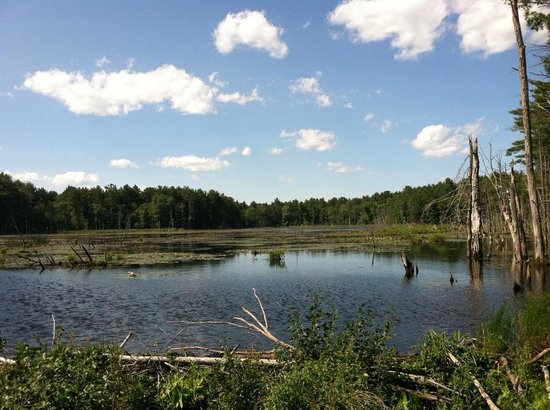 Bay Circuit Trail : Willowdale State Forest in Ipswich, MA