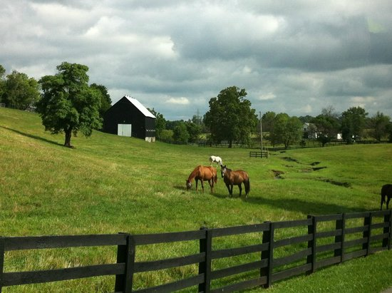Thoroughbred Heritage Horse Farm Tours: View from the van
