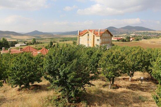 Le Palais des Cerisiers : au milieu des cerisiers
