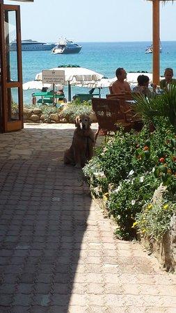 Hotel Biodola : Birba al bar della spiaggia