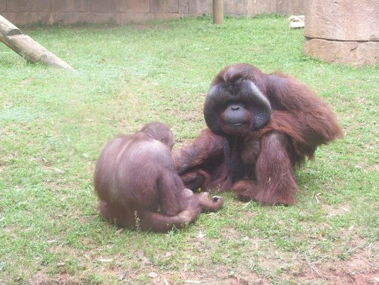 Travelers Rest / N Greenville KOA: Many fun things to do in our area- Greenville Zoo
