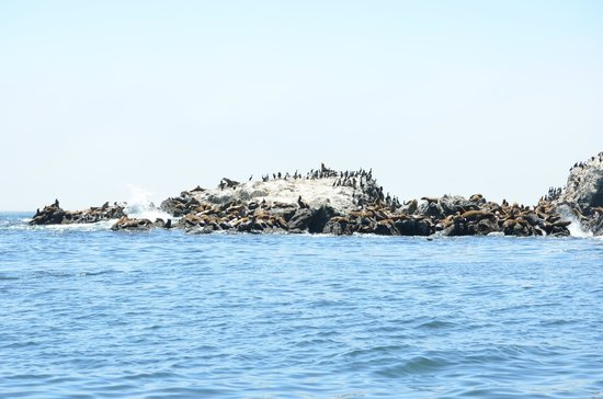 Bodega Bay Lodge: Seal Rock