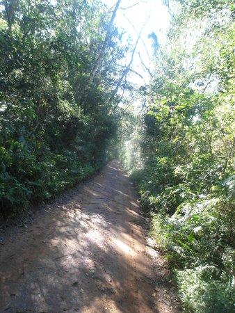 Poco Preto trail: the trail