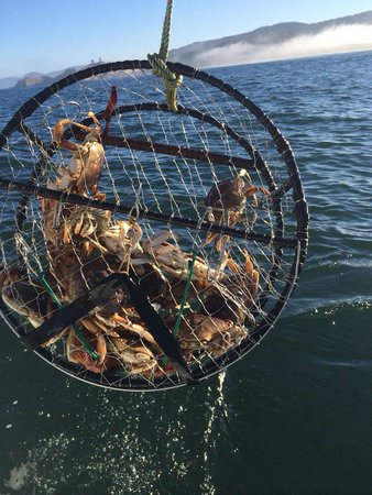 Pacific City Fishing: Dungeness crab