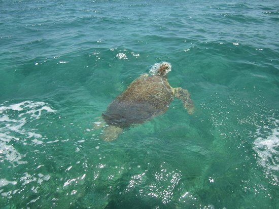 Conciencia Tours & Travel : Tortugas en Sian Ka'an
