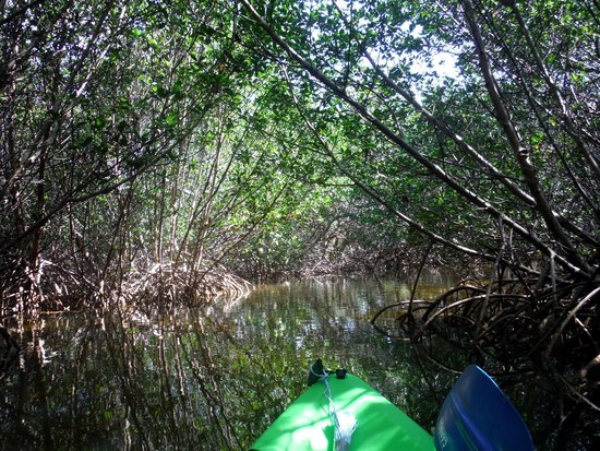 Curry Hammock State Park : Curry Hammock mangrove trail