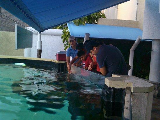 Interactive Aquarium: a los niños les encanta