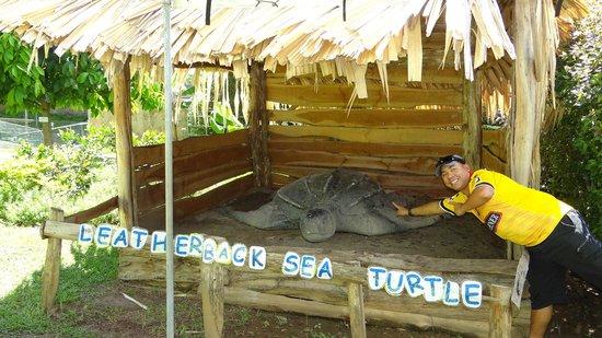 Emperor Valley Zoo : next to a giant Leatherback sea turtle