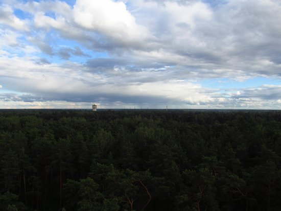 Dzintari Forest Park: View from the top of the tower