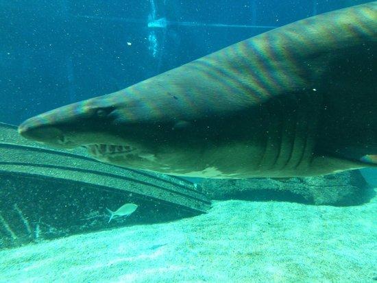uShaka Marine World: Sharkie