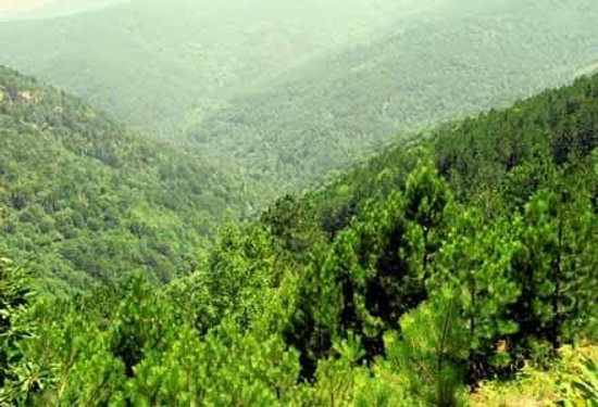 Kaz Mountains: Green