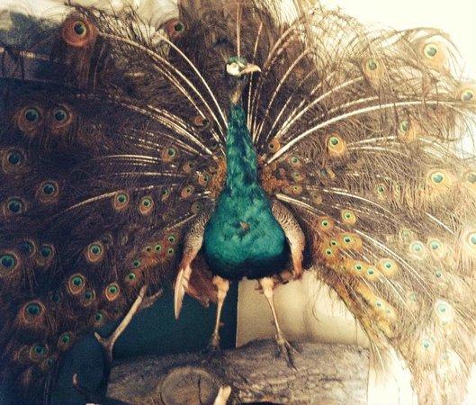 The Covenstead Glastonbury: Ornaments