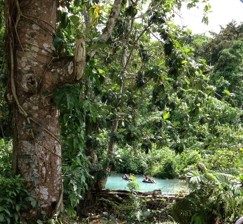 Real Tours Jamaica - Day Tours: Sightseeing through the country on our way to zip lining.