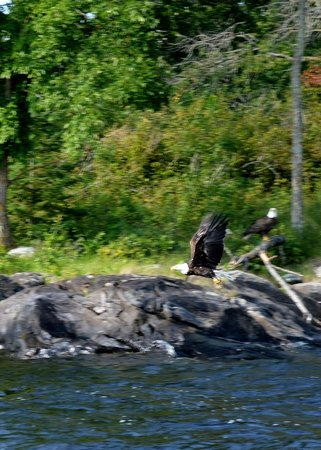 Northern Lights Resort & Outfitting: Wildlife by the resort