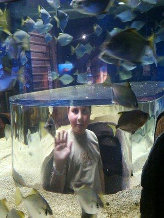 uShaka Marine World: Standing with the fish