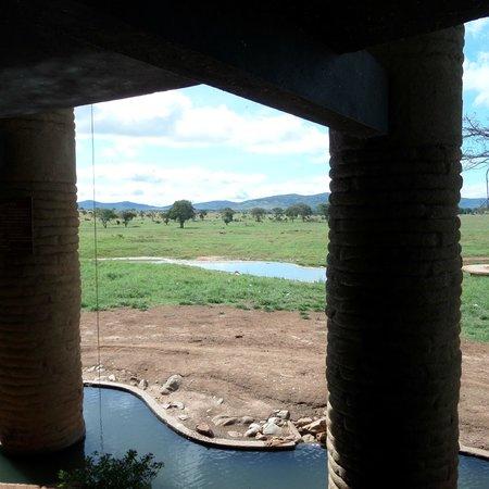 Sarova Salt Lick Game Lodge: View of waterhole