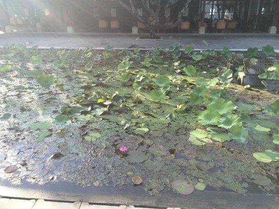 Belmond Jimbaran Puri: Teich